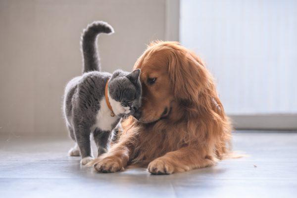 Healing-van-je-huisdier